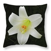 Easter Lily With Black Background Throw Pillow