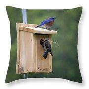 Western Blue Bird Throw Pillow