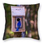 Eastern Bluebird Entering Home Throw Pillow