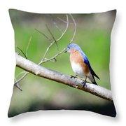 Eastern Bluebird Throw Pillow by George Randy Bass