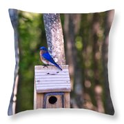 Eastern Bluebird Perched On Birdhouse 2 Throw Pillow
