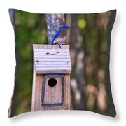 Eastern Bluebird Perched On Birdhouse 3 Throw Pillow