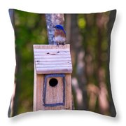 Eastern Bluebird Perched On Birdhouse 4 Throw Pillow