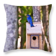 Eastern Bluebird Perched On Birdhouse Throw Pillow