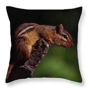 Eastern Chipmunk On Stump Throw Pillow