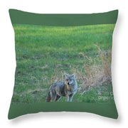 Eastern Coyote In Grass Throw Pillow