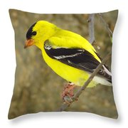 Eastern Goldfinch Throw Pillow