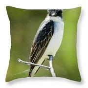 Eastern Kingbird Stare Throw Pillow