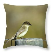 Eastern Phoebe At Falcon State Park Of Texas Throw Pillow