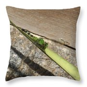 Eastern Pondhawk On A Leaf Throw Pillow