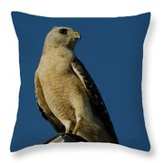 Eastern Red Shouldered Hawk Throw Pillow by April Wietrecki Green
