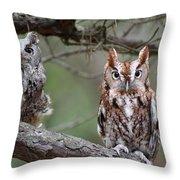 Eastern Screech Owls 424 Throw Pillow