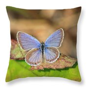 Eastern Tailed Blue Throw Pillow