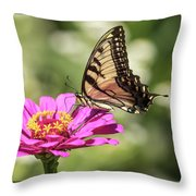 Eastern Tiger Swallowtail 2016-1 Throw Pillow