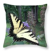 Eastern Tiger Swallowtail Sipping Nectar Throw Pillow
