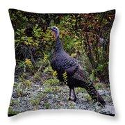 Eastern Wild Turkey Throw Pillow