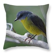 Eastern Yellow Robin Throw Pillow