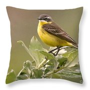 Eastern Yellow Wagtail Throw Pillow