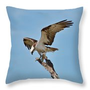 Eating Osprey-1 Throw Pillow by Rudy Umans