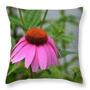 Echinacea 16-01 Throw Pillow