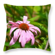 Echinacea 16-02 Throw Pillow