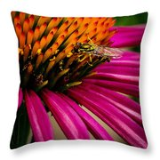 Echinacea And Syphrid Throw Pillow
