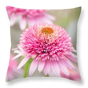 Echinacea Butterfly Kisses Throw Pillow