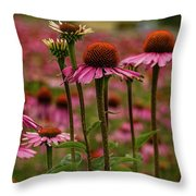 Echinacea Front And Center Throw Pillow