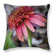 Echinacea Hot Papaya Throw Pillow
