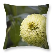 Echinacea Milkshake Throw Pillow
