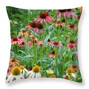 Echinacea Multi Mix Throw Pillow