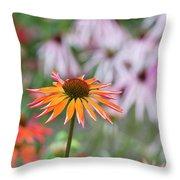 Echinacea Purpurea Orange Passion Flower Throw Pillow