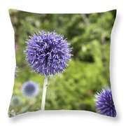Curious Echinop Peeking At The Camera Throw Pillow by Helga Novelli