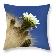 Echinopsis Atacamensis Cactus In Flower Throw Pillow