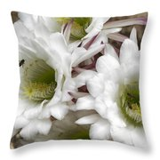 Echinopsis Blossoms  Throw Pillow