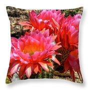 Echinopsis Flowers In Bloom II Throw Pillow