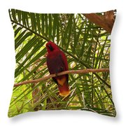 Eclectus Parrot 2 Throw Pillow
