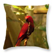 Eclectus Parrot Digital Oil Painting Throw Pillow