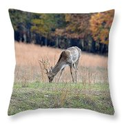 Edge Of The Forest Throw Pillow