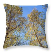 Edinburgh Birchwood Throw Pillow