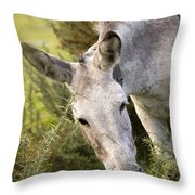 Eeyore Throw Pillow