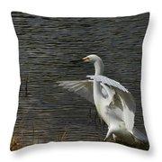 Egret Dance Throw Pillow