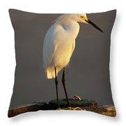 Egret Glow Throw Pillow
