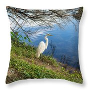 Egret In Florida Color Throw Pillow