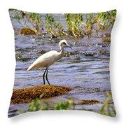 Egret On A Rock Throw Pillow