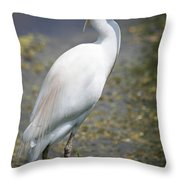 Egret Or Crane Throw Pillow
