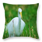 Egret Stare Down Throw Pillow
