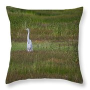 Egrets In A Field Throw Pillow