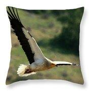 Egyptain Vulture In Flight  Throw Pillow