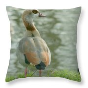 Egyptian Goose Throw Pillow